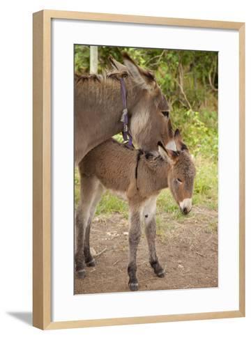 Donkey Mother and Foal-Brian Jannsen-Framed Art Print