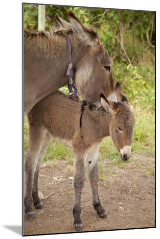 Donkey Mother and Foal-Brian Jannsen-Mounted Photographic Print