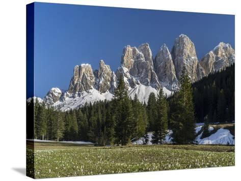Geisler Mountains Valley Villnoess, Spring-Crocus, Dolomites, South Tyrol, Italy-Martin Zwick-Stretched Canvas Print