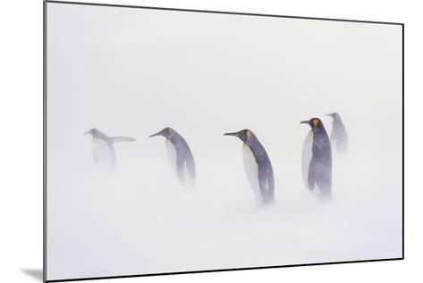 King Penguin Colony, St. Andrews Bay, Island of South Georgia-Martin Zwick-Mounted Photographic Print