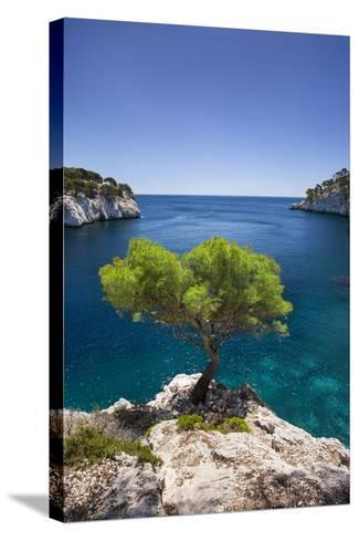 Lone Pine Tree Growing Out of Solid Rock, Calanques Near Cassis, Provence, France-Brian Jannsen-Stretched Canvas Print