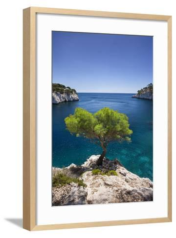 Lone Pine Tree Growing Out of Solid Rock, Calanques Near Cassis, Provence, France-Brian Jannsen-Framed Art Print