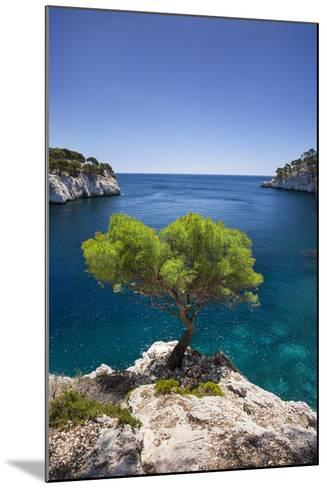 Lone Pine Tree Growing Out of Solid Rock, Calanques Near Cassis, Provence, France-Brian Jannsen-Mounted Photographic Print