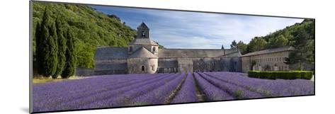 Rows of Lavender, Abbaye De Senanque Near Gordes, Luberon, Provence, France-Brian Jannsen-Mounted Photographic Print