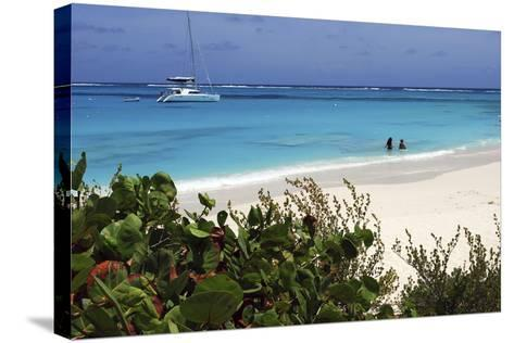 Swimming the Waters of Prickly Pear Island with Festiva Sailing Vacations-Lynn Seldon-Stretched Canvas Print