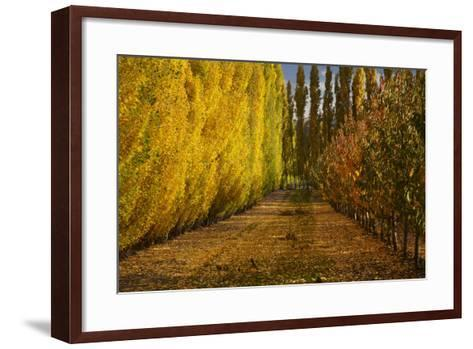 Orchard in Autumn, Ripponvale, Cromwell, Central Otago, South Island, New Zealand-David Wall-Framed Art Print