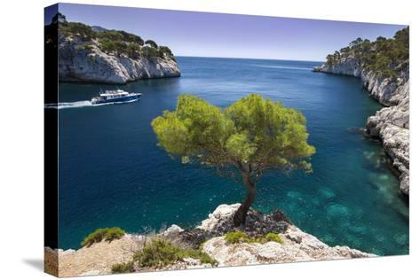 Tour Boat, Lone Pine Tree in the Calanques Near Cassis, Provence, France-Brian Jannsen-Stretched Canvas Print