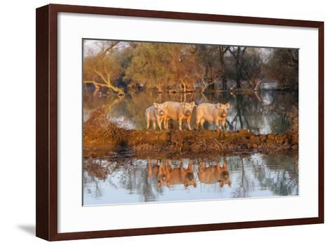 The Pigs of Maliuc, Animals, Danube Delta, Ramsar, Romania-Martin Zwick-Framed Art Print