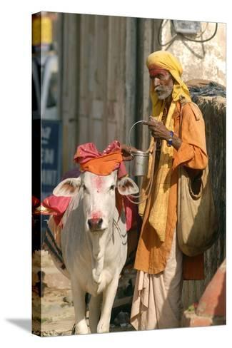 Sadhu, Holy Man, with Cow During Pushkar Camel Festival, Rajasthan, Pushkar, India-David Noyes-Stretched Canvas Print