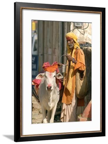 Sadhu, Holy Man, with Cow During Pushkar Camel Festival, Rajasthan, Pushkar, India-David Noyes-Framed Art Print