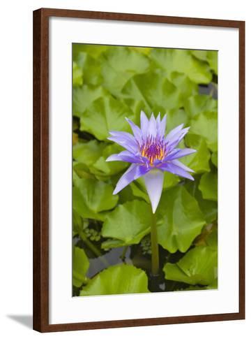 Water Lily Flower, Palau-Keren Su-Framed Art Print