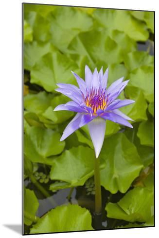 Water Lily Flower, Palau-Keren Su-Mounted Photographic Print