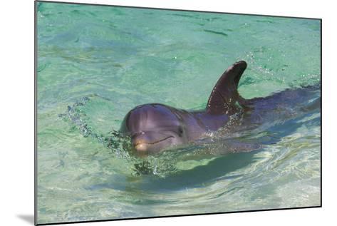 Dolphin in the Ocean, Roatan Island, Honduras-Keren Su-Mounted Photographic Print