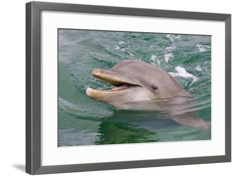 Dolphin in the Ocean, Roatan Island, Honduras-Keren Su-Framed Art Print