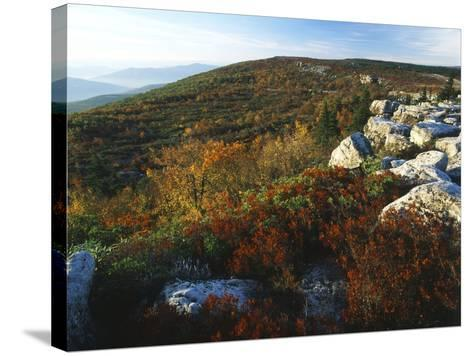 Bear Rocks, Dolly Sods Wilderness Area, Monongahela National Forest, West Virginia, USA-Adam Jones-Stretched Canvas Print