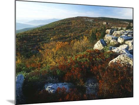 Bear Rocks, Dolly Sods Wilderness Area, Monongahela National Forest, West Virginia, USA-Adam Jones-Mounted Photographic Print