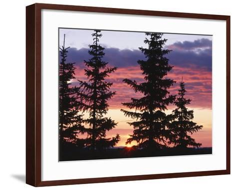 Sierra Madre Range with Spruce Tree, Medicine Bow National Forest, Wyoming, USA-Scott T^ Smith-Framed Art Print