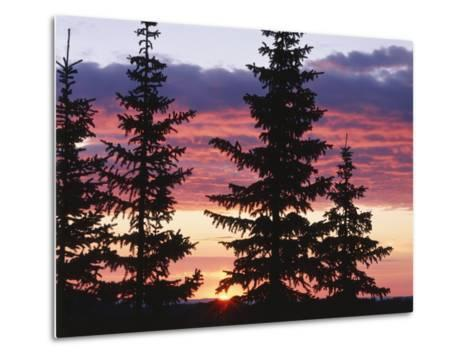 Sierra Madre Range with Spruce Tree, Medicine Bow National Forest, Wyoming, USA-Scott T^ Smith-Metal Print