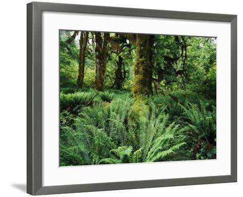 View of Clubmoss, Hoh Rainforest, Olympic National Park, Washington State, USA-Stuart Westmorland-Framed Art Print