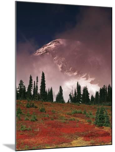 View of Mt. Rainier National Park, Washington, USA-Stuart Westmorland-Mounted Photographic Print