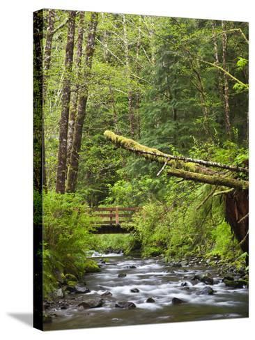 Short Sand Creek, Oswald West State Park, Oregon, USA-Jamie & Judy Wild-Stretched Canvas Print