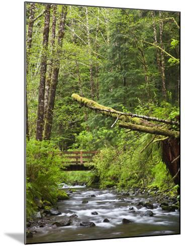 Short Sand Creek, Oswald West State Park, Oregon, USA-Jamie & Judy Wild-Mounted Photographic Print