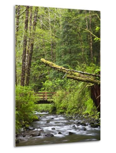 Short Sand Creek, Oswald West State Park, Oregon, USA-Jamie & Judy Wild-Metal Print