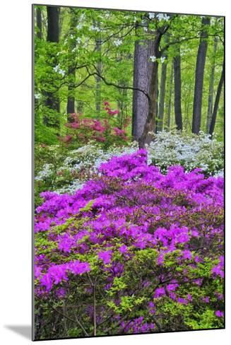 Winterthur Gardens, Delaware, USA Photographic Print by | Art.com