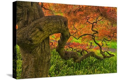 Close-Up Japanese Maple Tree, Winterthur Gardens, Delaware, USA--Stretched Canvas Print
