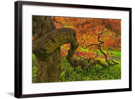 Close-Up Japanese Maple Tree, Winterthur Gardens, Delaware, USA--Framed Art Print