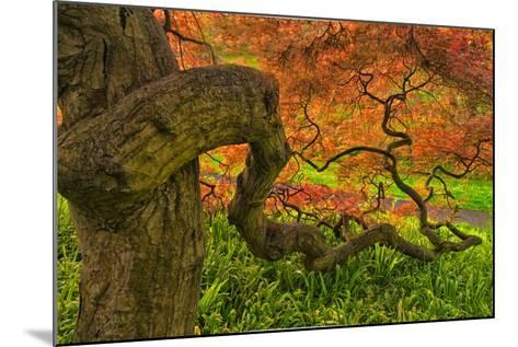 Close-Up Japanese Maple Tree, Winterthur Gardens, Delaware, USA--Mounted Photographic Print