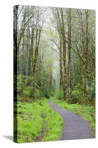 Forest Trail, Tiger Mountain State Forest, Washington, USA-Jamie & Judy Wild-Stretched Canvas Print