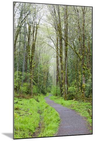 Forest Trail, Tiger Mountain State Forest, Washington, USA-Jamie & Judy Wild-Mounted Photographic Print