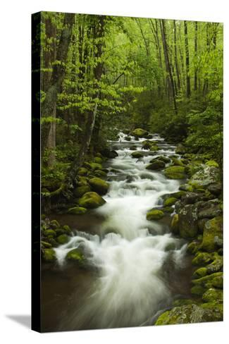 Stream at Roaring Fork Trail in the Smokies, Great Smoky Mountains National Park, Tennessee, USA-Joanne Wells-Stretched Canvas Print