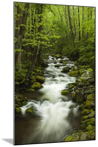 Stream at Roaring Fork Trail in the Smokies, Great Smoky Mountains National Park, Tennessee, USA-Joanne Wells-Mounted Photographic Print