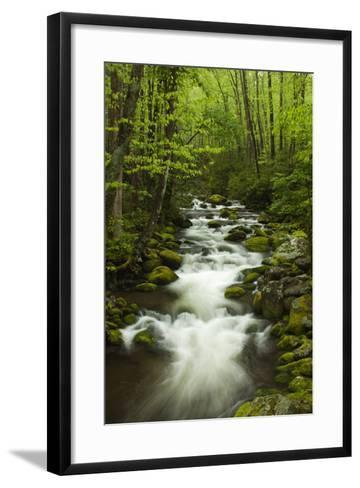 Stream at Roaring Fork Trail in the Smokies, Great Smoky Mountains National Park, Tennessee, USA-Joanne Wells-Framed Art Print