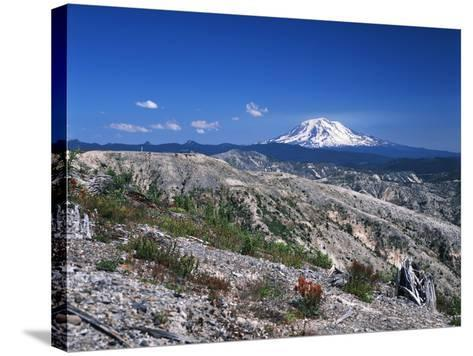 Mt Adams from Windy Ridge, Mt St Helens Volcanic National Monument, Washington, USA-Kent Foster-Stretched Canvas Print