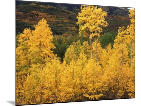 View of Autumn Aspen Grove on Mountain, Telluride, Colorado, USA-Stuart Westmorland-Mounted Photographic Print