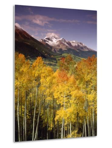 Aspen Tree, Snowcapped Mountain, San Juan National Forest, Colorado, USA-Stuart Westmorland-Metal Print