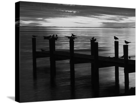 View of Birds on Pier at Sunset, Fort Myers, Florida, USA-Adam Jones-Stretched Canvas Print