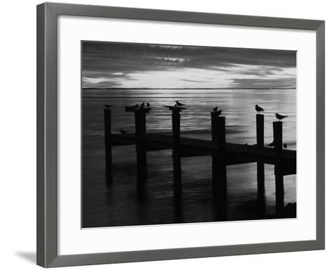 View of Birds on Pier at Sunset, Fort Myers, Florida, USA-Adam Jones-Framed Art Print