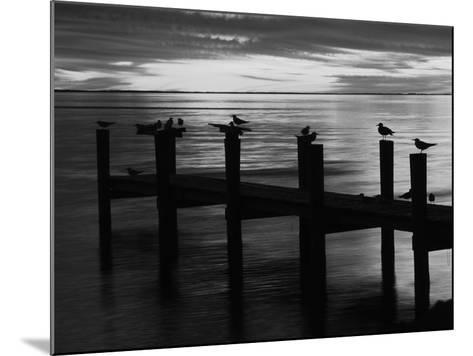 View of Birds on Pier at Sunset, Fort Myers, Florida, USA-Adam Jones-Mounted Photographic Print