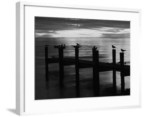 View of Birds on Pier at Sunset, Fort Myers, Florida, USA-Adam Jones-Framed Art Print