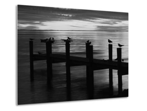 View of Birds on Pier at Sunset, Fort Myers, Florida, USA-Adam Jones-Metal Print