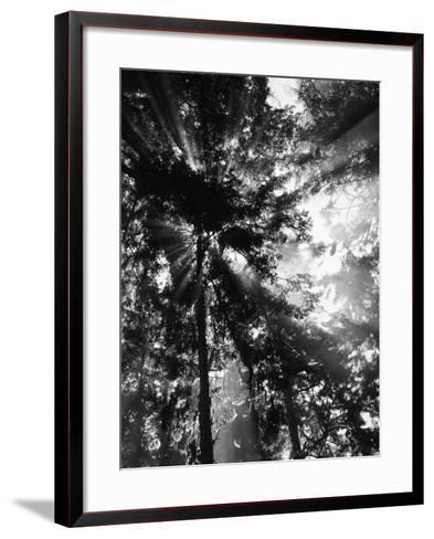Sunbeam Passing Through Trees, Olympic National Park, Washington State, USA-Adam Jones-Framed Art Print
