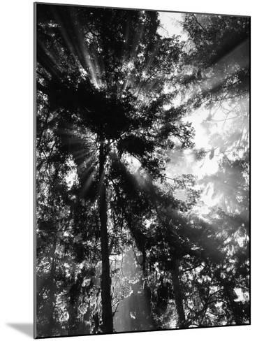 Sunbeam Passing Through Trees, Olympic National Park, Washington State, USA-Adam Jones-Mounted Photographic Print