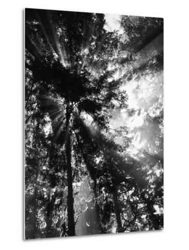 Sunbeam Passing Through Trees, Olympic National Park, Washington State, USA-Adam Jones-Metal Print