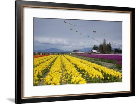 Tulips in Bloom, Annual Skagit Valley Tulip Festival, Mt Vernon, Washington, USA-John & Lisa Merrill-Framed Art Print