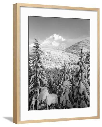 Winter Frost Trees on Mt. Hood, Mt Hood National Forest, Oregon, USA-Stuart Westmorland-Framed Art Print