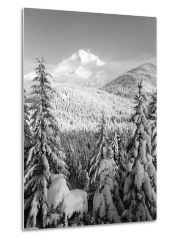 Winter Frost Trees on Mt. Hood, Mt Hood National Forest, Oregon, USA-Stuart Westmorland-Metal Print